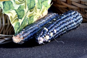 Free photo of two ears of blue corn