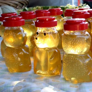 Free Photo of Honey Bears