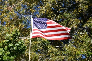 Free high resolution photo of an American flag amongst trees