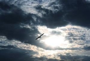 free high resolution photo of a flying bird silhoutted against a cloudy sky