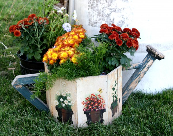 free photo of chrysanthemums in a watering can pot