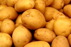 free high resolution photo of yukon gold potatoes