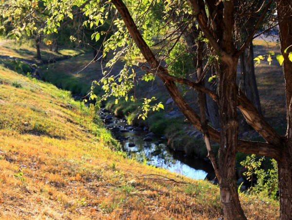 Free high resolution photo of a tree on the banks of a creek