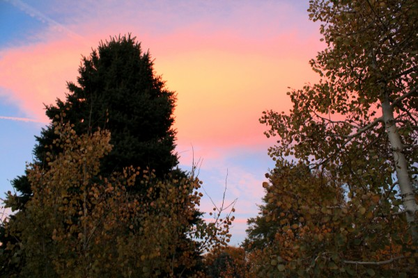 Autumn Trees and Pink Clouds - Free High Resolution Photo