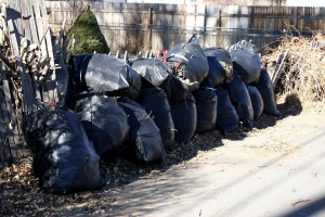 Bags of Leaves - Free High Resolution Photo