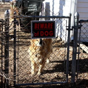 Barking Dog with Beware Sign - free high resolution photo