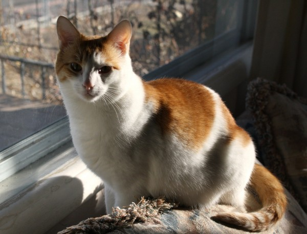 Orange and White Cat - Free High Resolution Photo