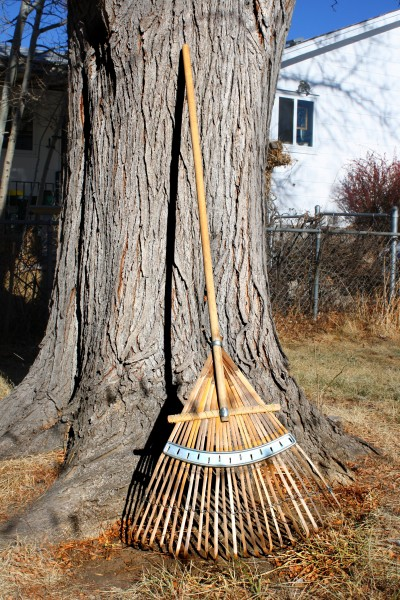 Rake Leaning Against Tree - Free High Resolution Photo