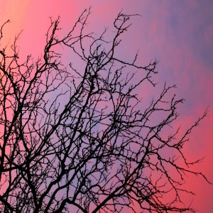 sunset through winter tree branches - free high resolution photo
