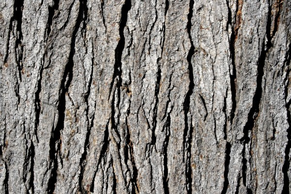 Tree Bark Texture - Free High Resolution Photo