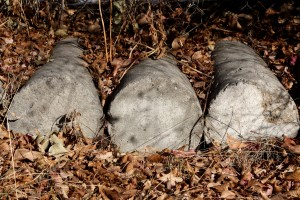 Cylindrical Cement Blocks Covered with Leaves - Free High Resolution Photo