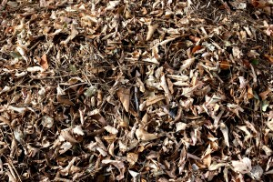 Dead Leaves and Sticks Texture - Free High Resolution Photo