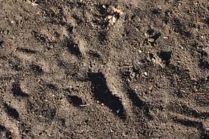 Dirt Texture - Free High Resolution Photo
