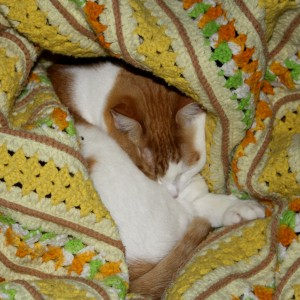 Orange and White Cat Sleeping in Yellow Blanket - Free High Resolution Photo