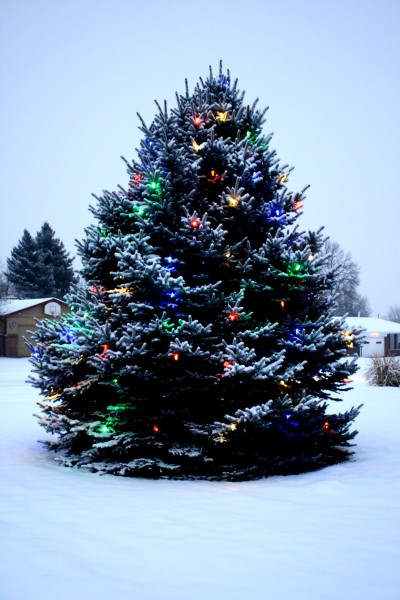 Outdoor Christmas Tree with Lights and Snow - Free High Resolution Photo