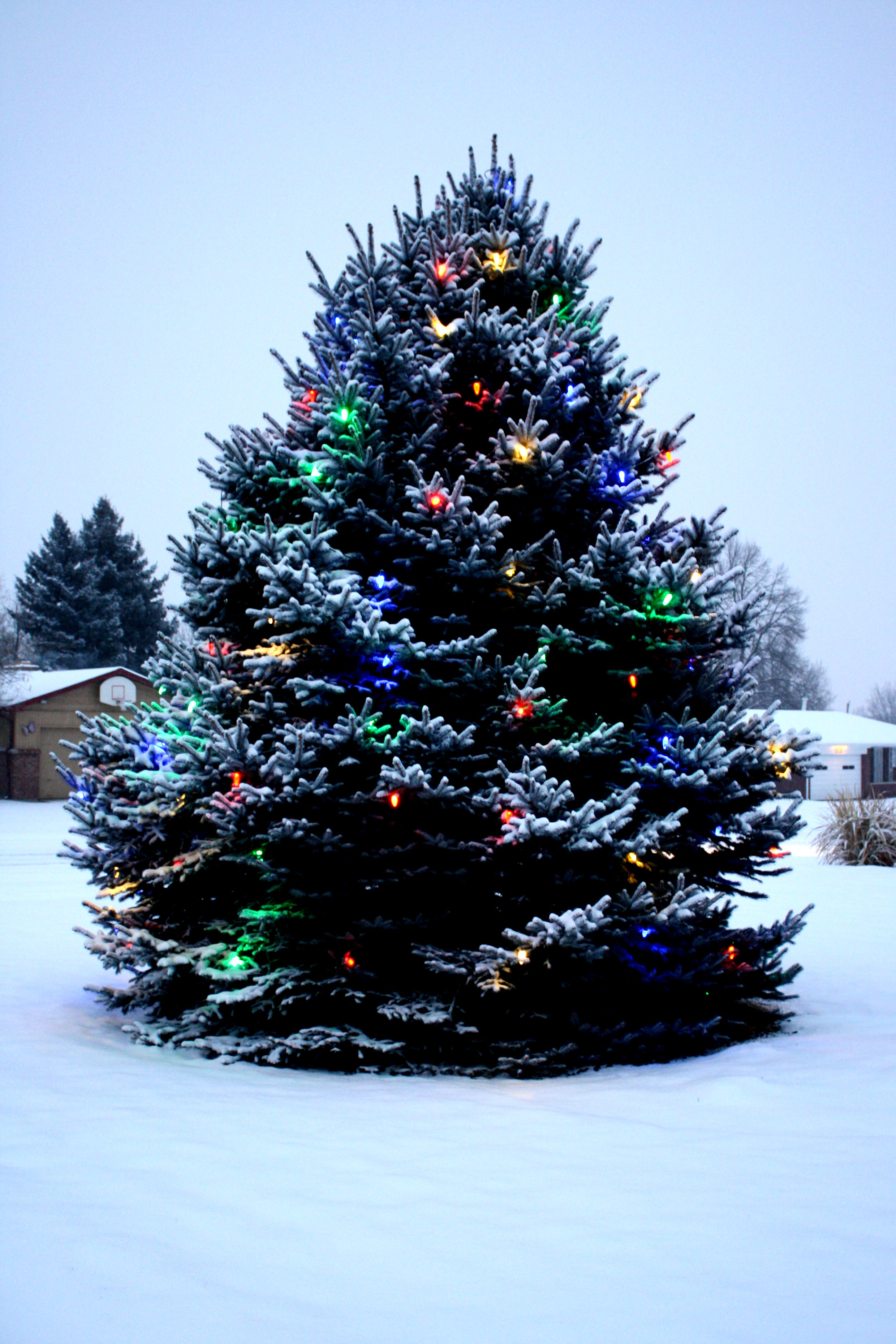 Outdoor Christmas Tree with Lights and Snow Picture | Free Photograph | Photos Public Domain
