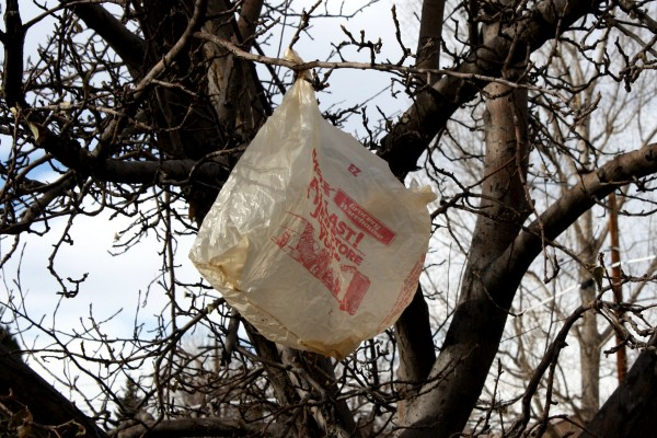 Plastic Bag in Tree - Free High Resolution Photo