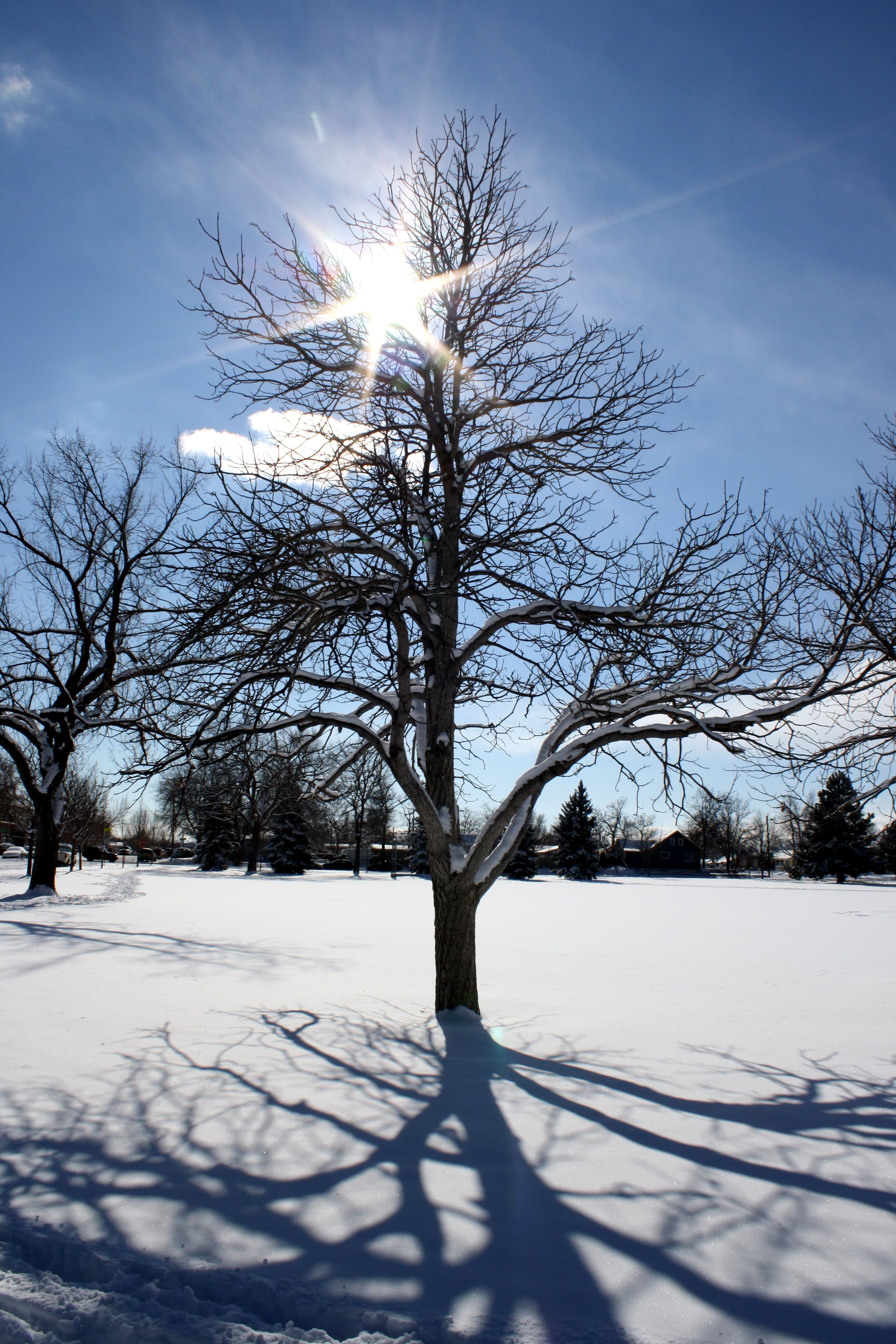 Sun Through Winter Tree Branches Picture Free Photograph