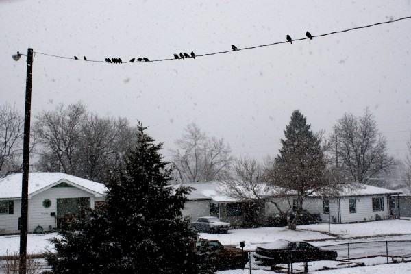 Birds on Power Line during Snow Storm - Free High Resolution Photo