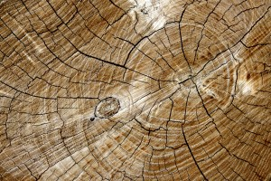 Cut End of Log with Tree Rings Texture - Free High Resolution Photo