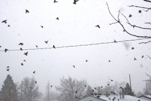 Flock of Birds in Snow Storm - Free High Resolution Photo