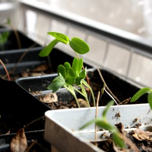 Seedlings in Greenhouse - Free High Resolution Photo