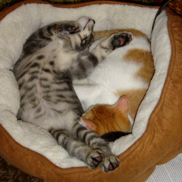 Silly Sleeping Kittens - Free High Resolution Photo