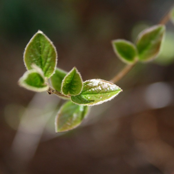 Spring Leaves Close Up - Free High Resolution Photo