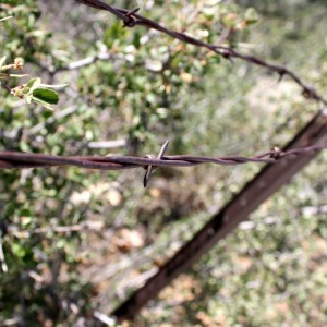 Barb on Rusted Barbed Wire Fence - Free High Resolution Photo
