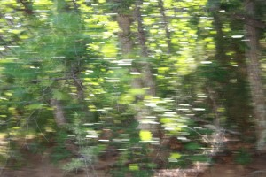 Blurry Trees Shot from Moving Car - Free High Resolution Photo