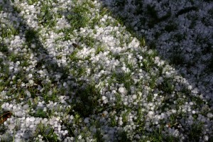 Grass Coated with Hail - Free High Resolution Photo