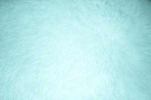 Aqua Colored Fur Texture - Free High Resolution Photo