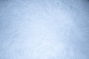 Baby Blue Fur Texture - Free High Resolution Photo