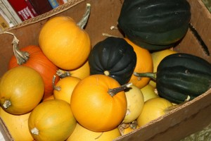 Box Full of Squash - Free High Resolution Photo