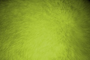Chartreuse Fur Texture - Free High Resolution Photo