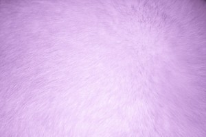 Lavender Fur Texture - Free High Resolution Photo