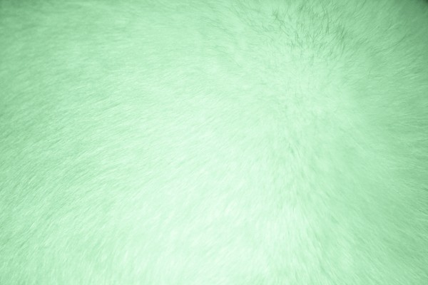 Light Green Fur Texture - Free High Resolution Photo