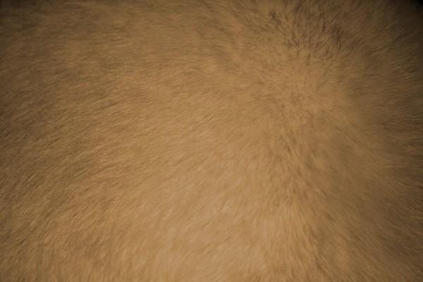 Tan or Light Brown Fur Texture - Free High Resolution Photo