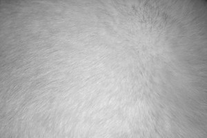 White Fur Texture - Free High Resolution Photo