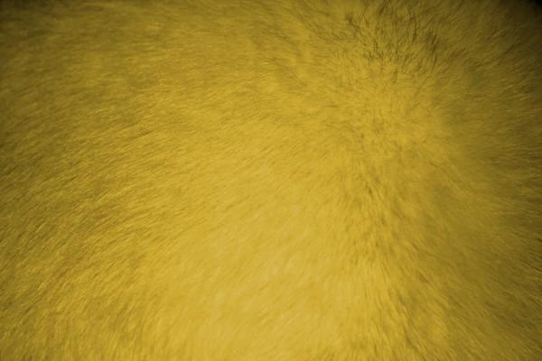 Yellow Fur Texture - Free High Resolution Photo
