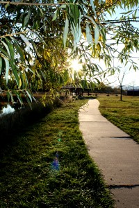 Bike Path at the Park - Free High Resolution Photo