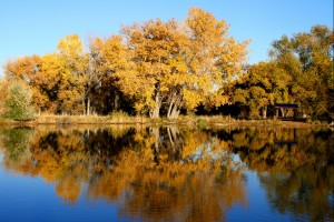 Fall Trees Reflected in Lake - Free High Resolution Photo