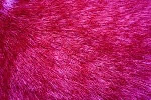 Fuchsia Fur Texture - Free High Resolution Photo