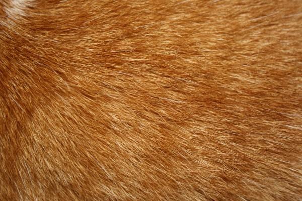 Orange Tabby Cat Fur Texture - Free High Resolution Photo