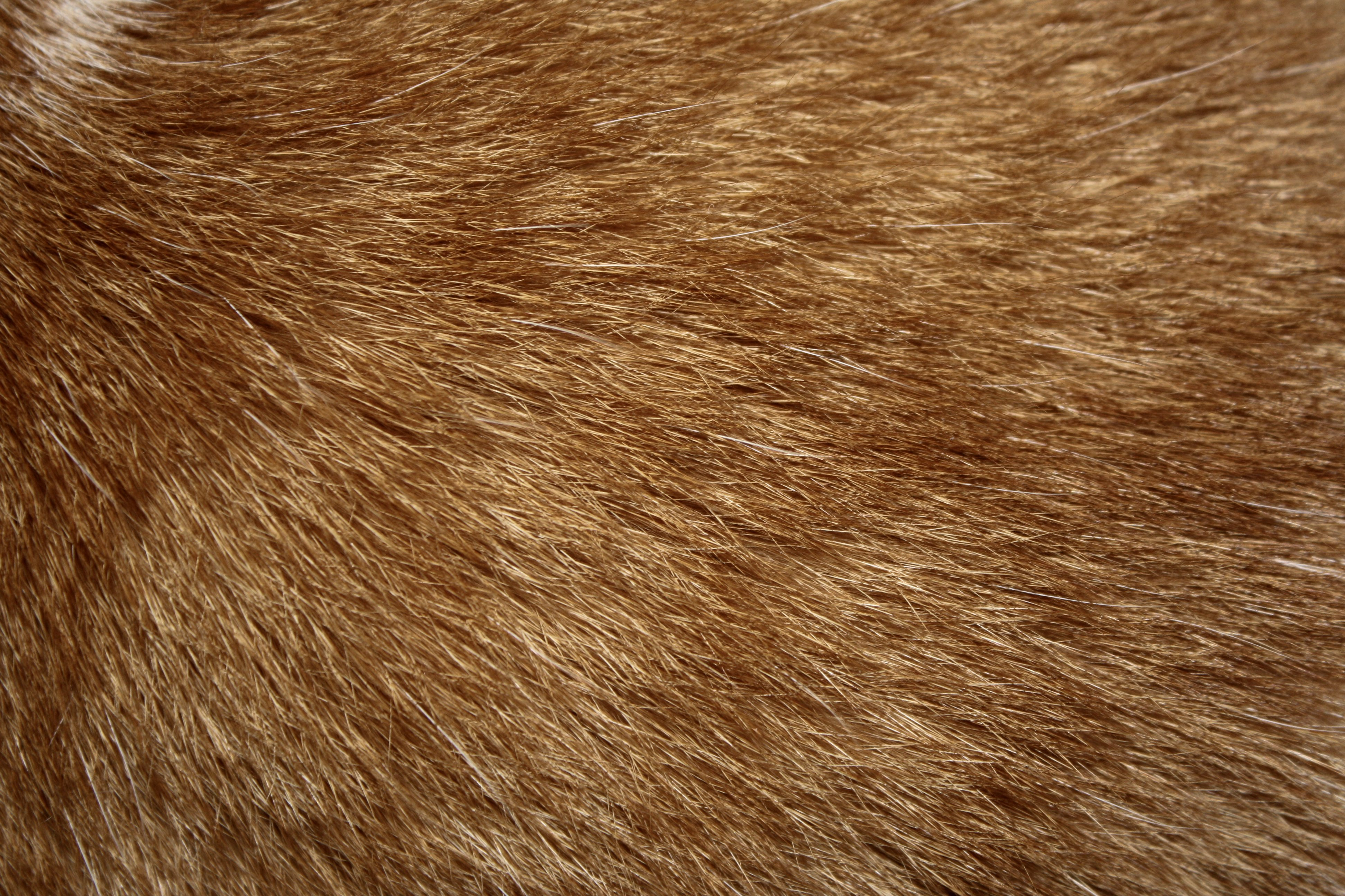 Brown fur texture | Stock Photo | Colourbox