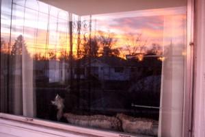 Cat Watching Sunrise through Window - Free High Resolution Photo