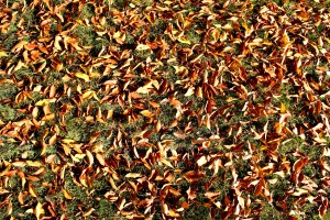 Fall Leaves on Grass Texture - Free High Resolution Photo