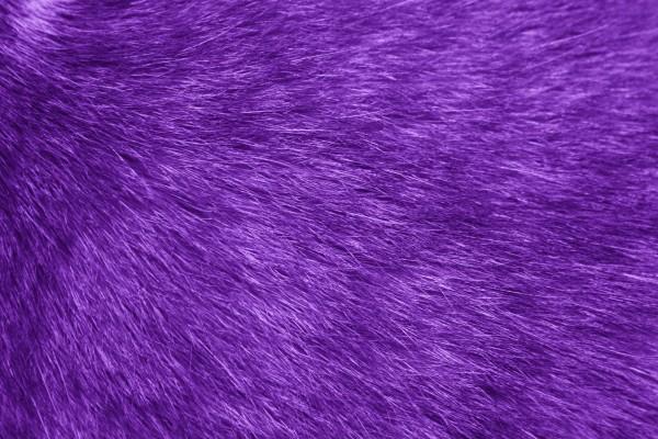 Purple Fur Texture - Free high resolution photo