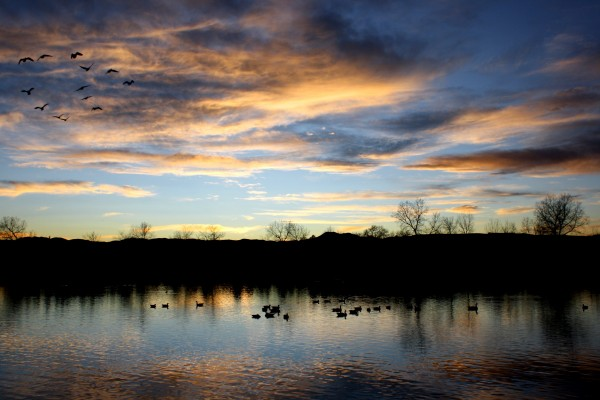 Geese Flying over Lake at Sunset - Free High Resolution Photo