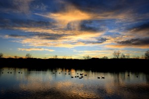 Geese on Lake at Sunset - Free High Resolution Photo